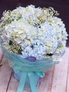 * 荷蘭淺藍大繡球花束