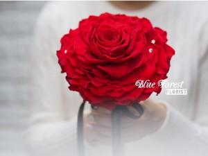 巨大日本保鮮玫瑰花花球